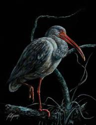 ibis by PAVELOWSKY