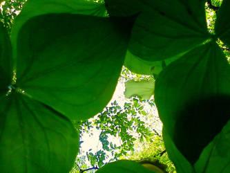 Chlorophyll by ElementalEpic
