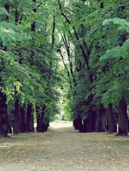 path by terresebatate