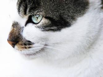 meow by terresebatate