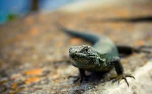 I am Mr. Lizard by Jikul