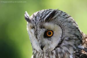 European eagle owl by HappyRaindrop