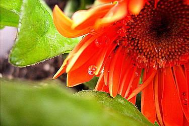 Teardrops of a Flower by poetic--wings