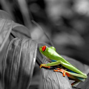 A Technicolor Frog in a Monochrome World by wilder-trash