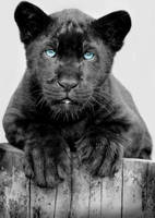 Little Bluey by wilder-trash