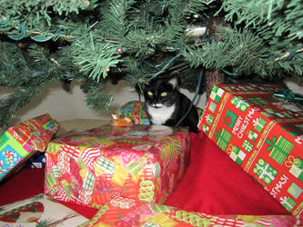 Christmas Kitty by InvdrDana