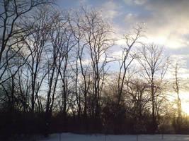 Pretty trees by InvdrDana
