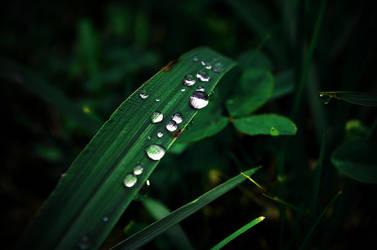 Drip Drop by ErinKatie101