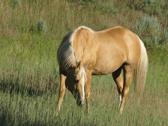 Palomino Horse by Syeiraxx