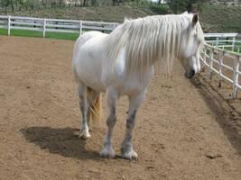 Draft Horse 7 by Syeiraxx