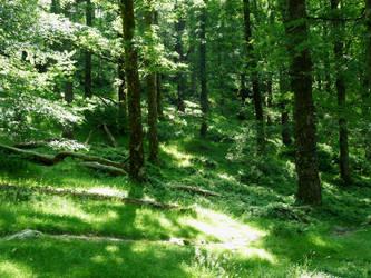 Fairy forest by melianfool