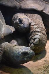 Turtle love by melianfool
