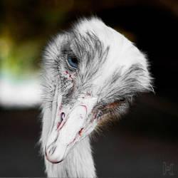 Parc Phoenix - Rhea americana I by Fab-LeBLANC