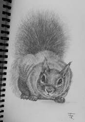 Squirrel drawing by Yakise