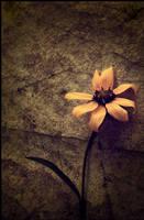 Serendipity by dinmeleth2004