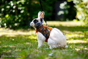 Le lapin - The rabbit by ClementRoelens
