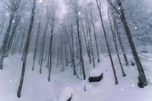 Snowy Days by Rizone