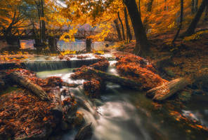 Autumn by Rizone