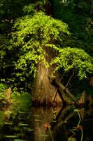 copacul de vise inundat by anmaria
