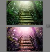 LR preset: Purple Nature -free by kakiii