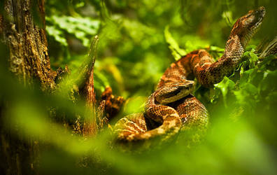 Snakes by dejz0r