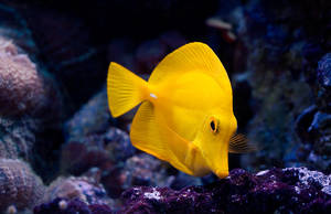 A yellow Fish... by dejz0r