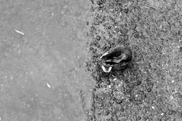 2010 - Duck by Mechamouche