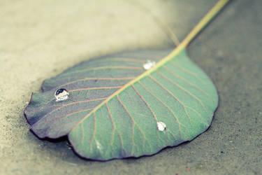 2010 - Leaf drops by Mechamouche