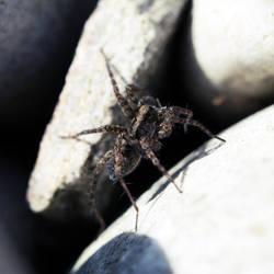 2011 - Spider I by Mechamouche