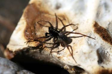 2011 - Spider II by Mechamouche