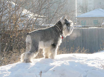 Winter Gabby by clotus