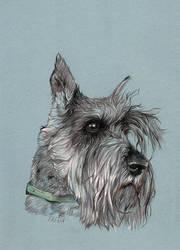 Mini schnauzer portrait by clotus