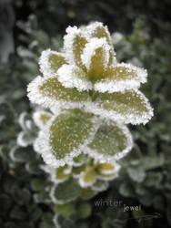 Winter jewel by sp-andreea