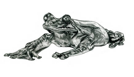 Rabb's Fringed-Limbed Tree Frog by Tanias-Reign