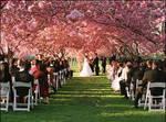 Under the Sakura Matsuri by TheTempestOfNature