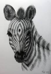 my little zebra by MorgaineA
