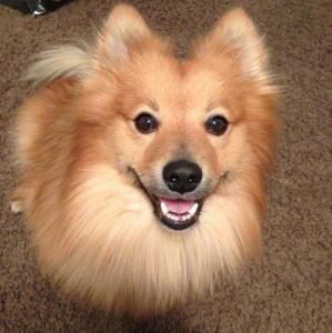 BrightAkira's Profile Picture