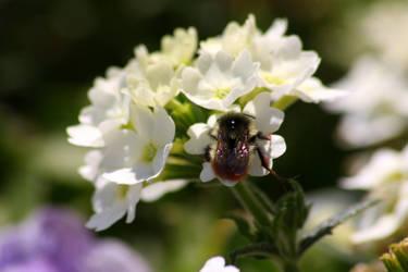 Fuzzy Bee by XxQuothTheRavenxX