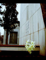 Flor -de Allende- by drawfactory
