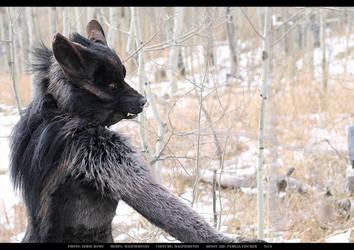 Werewolf: Graveyard shoot 002 by Magpieb0nes