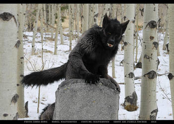 Werewolf: Graveyard shoot 003 by Magpieb0nes