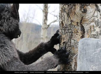 Werewolf: Graveyard shoot 005 by Magpieb0nes