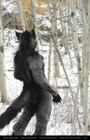 Werewolf: Graveyard shoot 010 by Magpieb0nes