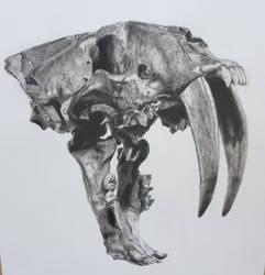 Sabertooth skull by 70ms