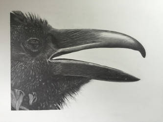 The Raven (graphite, 22x30) by 70ms
