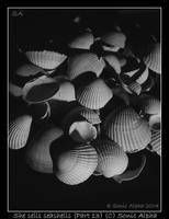 She sells seashells XIII by sonicalpha