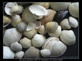 She sells seashells (Desktop) by sonicalpha