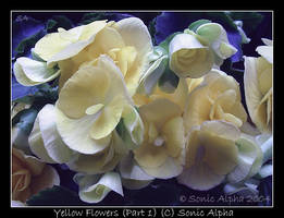 Yellow Flowers I by sonicalpha
