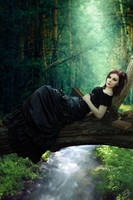 Wooded Sanctuary by consine
