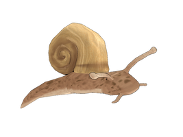 MMD - Snail V01 by AbsentWhite